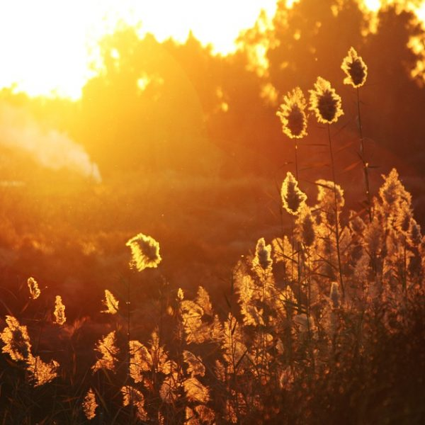 sunset leaves